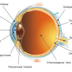Анатомия глаза человека